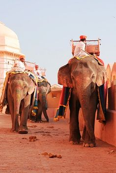 #Taj Mahal Taxis http://www.dtourntravels.com join_dineshsharma@yahoo.in Call +91-8947932281