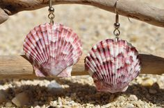 Super cute seashell earrings!! $12.00
