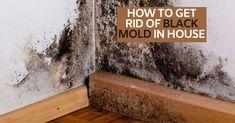 Kill Black Mold, Clean Black Mold, Remove Black Mold, Cleaning Mold, Household Cleaning Tips, House Cleaning Tips, Deep Cleaning, Cleaning Hacks, Effects Of Black Mold