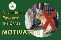 How to Crate Train a Puppy - Dog Training, Dog Tips - PetCareRx