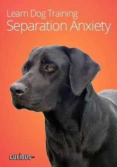 Does my dog have separation anxiety separation anxiety dog and your dogs destructive behaviors may be a sign of separation anxiety learn how to alleviate your dogs stress for a happy healthy and nondestructive pet fandeluxe Epub