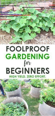Gardening for beginners - Vegetable gardening ideas that will create high yields with zero effort. No watering, no watering! Organic backyard gardening tips! garden, How we grew HUNDREDS of pounds of food without weeding or watering a single time! Vegetable Garden For Beginners, Vegetable Garden Design, Gardening For Beginners, Vegetable Gardening, Biodynamic Gardening, Easy Garden, Diy Garden Decor, Garden Ideas, Indoor Garden