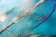 Dragonfly Wing.