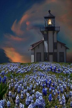 Point Cabrillo Lighthouse, Mendocino County, Northern California