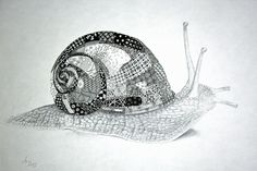 Tangled snail shell ~ love it!  By Anya Lothrup, CZT