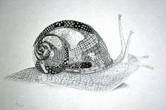 Tangled snail shell ~ love it!  By Anya Lothrup, CZT