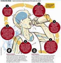 ÁGUA: como funciona o mecanismo de hidratação do corpo #saúde #água #hidratação…