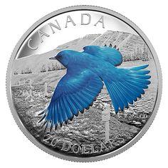 1 oz. Fine Silver Coloured Coin – Colourful Birds of Canada: The Mountain Bluebird (2016)