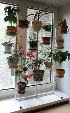 Several plants are beneficial, not only for aesthetics but also for health. For example, people are happier and are more productive when plants are present. Therefore, the role of indoor plant decor for a healthy atmosphere is indisputable. Small Balcony Garden, Indoor Garden, Indoor Plants, Garden Living, Garden Cottage, House Plants Decor, Plant Decor, Garden Rack, Window Box Flowers