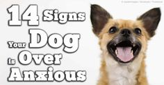 Signs of Maladaptive Stress Reactions in Dogs