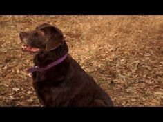 Heeling Outside | Teacher's Pet With Victoria Stilwell