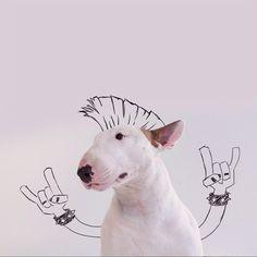Bull Terrier Becomes Star in Owner's Whimsical Illustrations