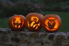 Citrouilles d'#Halloween !
