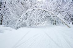 fallen tree - A tree bends over the path because of heavy snowfall in Haliburton, Ontario.