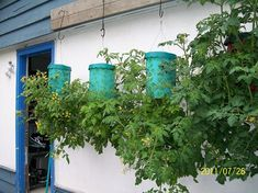 Baş-Aşağı-Sebze-Yetiştirme-1 Wind Chimes, Terrarium, Planter Pots, Outdoor Decor, Plants, Gardening, Cabin, Green Houses, Tomatoes