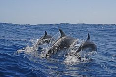 crazy bermuda | In 2005 three wild dolphins living off the coast of Bermuda surprised ...