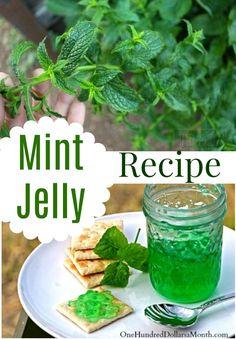 Minze-Gelee-Rezept Mint Jelly Rezept, Mint Jelly, Rezepte mit Minze, Canning Rezepte # Mint Recipes, Herb Recipes, Jelly Recipes, Canning Recipes, Freezer Recipes, Canning 101, Herbal Jelly Recipe, Jam Recipes With Herbs, Apple Mint Jelly Recipe
