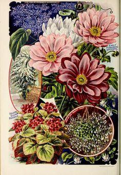 Childs' rare flowers, vegetables