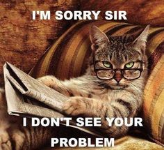 Funny animal pictures fresh from the net. Hand picked funny animal pictures of funny animals every hour. I Love Cats, Crazy Cats, Cute Cats, Funny Cats, Funny Animals, Cute Animals, Clever Animals, Animal Fun, Animal Pictures