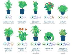 In 1989, NASA launched a Clean Air study to determine which household plants are best at filtering harmful toxins and pollutants from the air. Here are the top 18!  Read More: http://www.trueactivist.com/top-18-household-plants-to-purify-the-air-according-to-nasa-infographic/