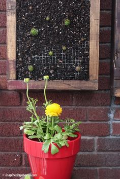 inspired by charm: Outdoor Shelves Part Two: Framed Hens and Chicks