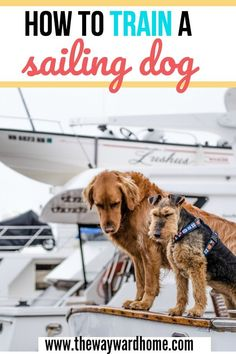 Want to train a dog to go sailing or ride on your power boat? Here are some tips on training a dog for boating. #boatlife #boating #sailboat