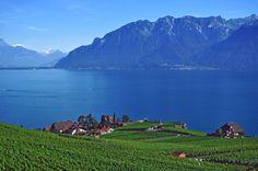 Vineyards, Geneva Lake, Switzerland