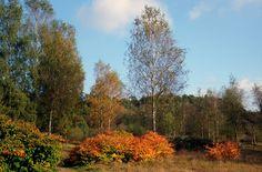 Autumn IV by Watze D. de Haan