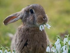 Get complete rabbit information, instructions and pictures for every facet of raising and breeding rabbits as pets, or for meat, show and fur Cute Baby Animals, Animals And Pets, Funny Animals, Beautiful Creatures, Animals Beautiful, Tier Fotos, Hamsters, Rodents, Cute Bunny