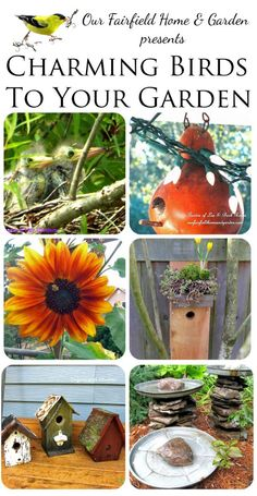 Charming Birds to Your Garden (a collection of ideas & tips by the Garden Charmers)