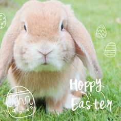 Wishing you a #HappyEaster season from all of us!
