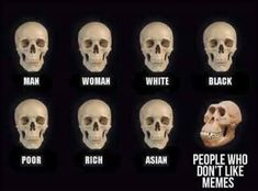 Skull Comparisons: Image Gallery | Know Your Meme