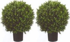 Two 2 Foot Outdoor Artificial Boxwood Ball Topiary Bushes Potted Uv Rated Plants 18 inches Wide
