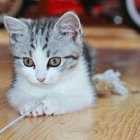 #dogalize Il gatto gioca durante la notte: cosa non fare #dogs #cats #pets