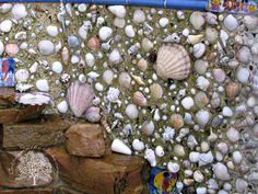 Seashell Wall