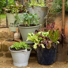 Bucket planters | Country garden ideas | Garden | PHOTO GALLERY | Country Homes and Interiors | Housetohome.co.uk
