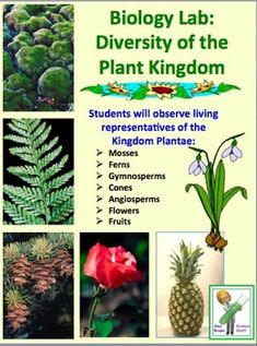 a discussion of the diverse plant kingdom Plants i - evolution and diversity habitat distinguish members of the plant kingdom on to a discussion of plant phylogeny and begin our review of the.