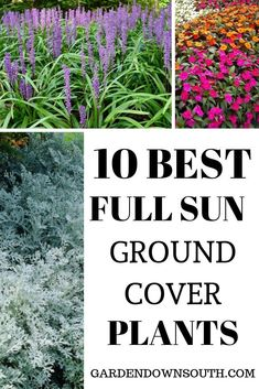 Ground covers can serve many purposes. We use ground cover to add a splash of color to the landscape. It can be used to effectively retain moisture and keep weeds smothered out acting as a living mulc Partial Sun Perennials, Best Perennials, Hardy Perennials, Flowers Perennials, Full Sun Garden, Full Sun Plants, Easy Garden, Garden Ideas, Full Sun Hostas