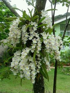 are orchids poisonous to cats Unusual Flowers, Unusual Plants, Rare Flowers, Rare Plants, Exotic Plants, Flowers Nature, Cool Plants, Amazing Flowers, White Flowers