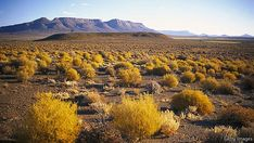 Karoo vegetation