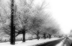 I took this picture during Snowmageddon in Lynnwood. It turned out quite pretty if I may say so myself ;)