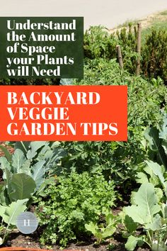 Understanding the amount of space your vegetable plants will need is an important part of planning your backyard veggie garden. Learn about these tips to have a successful beginner vegetable garden! Starting A Vegetable Garden, Vegetable Garden For Beginners, Backyard Vegetable Gardens, Gardening For Beginners, Gardening Tips, Cabbage Plant, Squash Seeds, Seed Packaging, Planting Vegetables