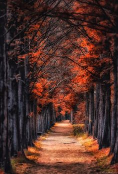 Beautiful Nature Wallpaper, Beautiful Landscapes, Fall Pictures, Nature Pictures, Autumn Photography, Landscape Photography, Beautiful World, Beautiful Places, Autumn Scenes
