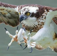 Terrific Free of Charge beautiful birds of prey Tips As being a chickens of food shooter, the most crucial difficulty the majority of complain pertaining to could Pretty Birds, Beautiful Birds, Animals Beautiful, Cute Animals, All Birds, Birds Of Prey, Bird Pictures, Animal Pictures, Aigle Animal
