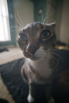 https://flic.kr/p/G5KrUP | Macro Cat