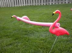 Flamingo limbo