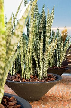 """from """"casa e jardim"""" website Indoor Garden, Garden Pots, Indoor Plants, Landscaping Plants, Front Yard Landscaping, Outdoor Planters, Outdoor Gardens, Cacti And Succulents, Cactus Plants"""