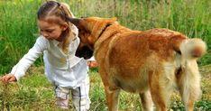 Comment dire «Je t'aime» à son chien ?