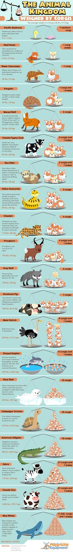 The animal kingdom weighed by corgis.