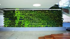 There is a rise of #livingwalls in home interior decorating. This is why people love them. http://livingarchitecturemonitor.com/index.php/news/allnews/640-the-rise-of-living-walls-for-home-interiors